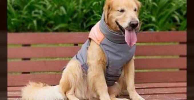 ropa para perros labradores