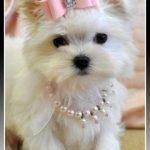 Complementos para perros pequeños