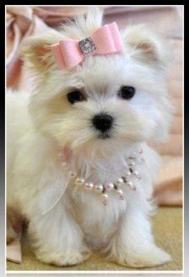 accesorios para perros pequeños baratos