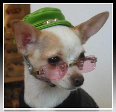 accesorios para perros pequeños chile