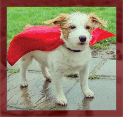 capas para mascotas perros