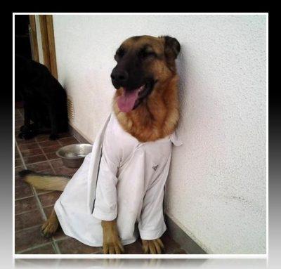como hacer poleras para perros