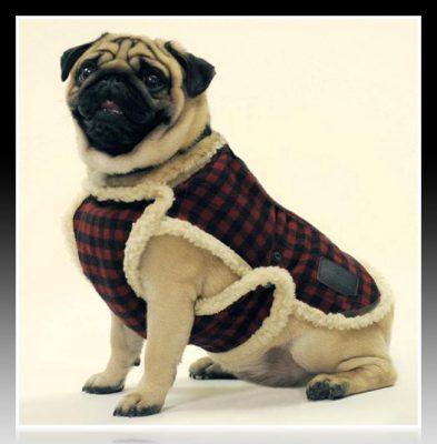 como hacer ropa para perro en casa