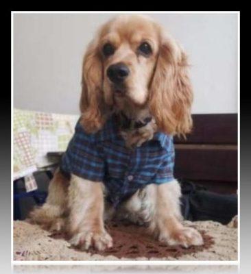 como hacer ropa para perros caniches