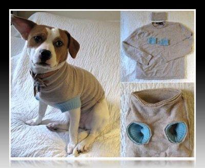 como hacer ropa para perros caniches paso a paso