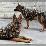 Ropa de invierno para perros grandes