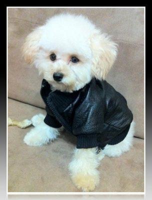 como hacer ropa para perros facil y rapido