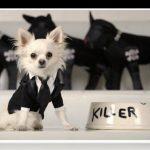 Trajes para cachorros en una fecha especial