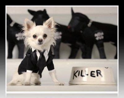 como hacer trajes para cachorros