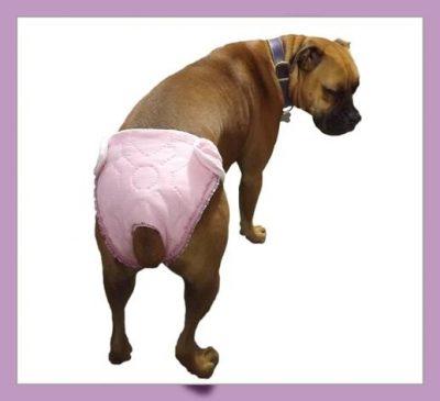 como hacer un pañal para perro