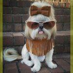 imagenes de ropa de moda para perros
