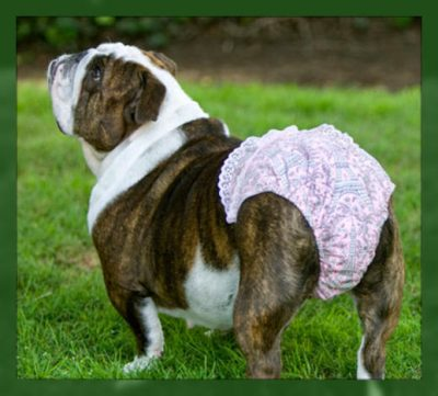 imagenes de ropa interior para perros