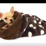 Mantitas para perros para mantenerlos abrigados