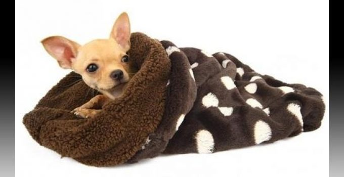 mantas para perros coche