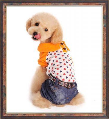 modelos de ropa para perros pequeños