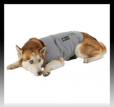 moldes de poleras para perros