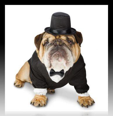 moldes de ropa para perros por tallas