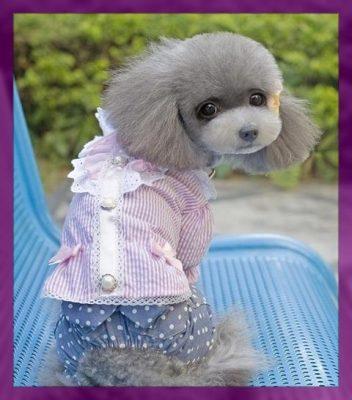 moldes para hacer ropa para perros