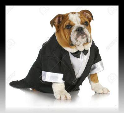 patrones de ropa para perros gratis para descargar
