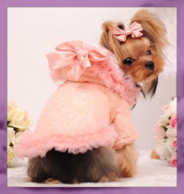 patrones de ropa para perros pequeños gratis