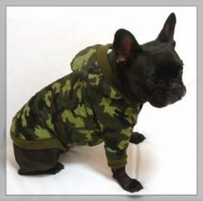 patrones ropa para perros pequeños machos