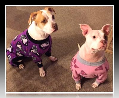 pijamas para perros chihuahua