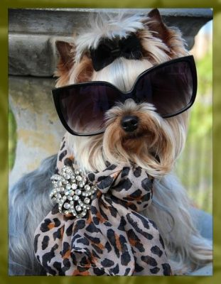 ropa ala moda para perros