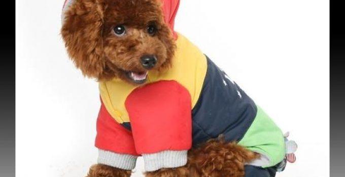 ropa de invierno para perros
