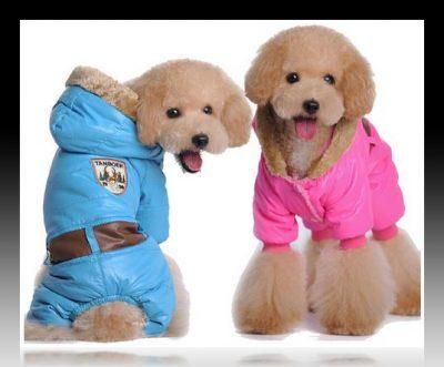 ropa de invierno para perros pequeños