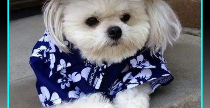 ropa de moda para perros