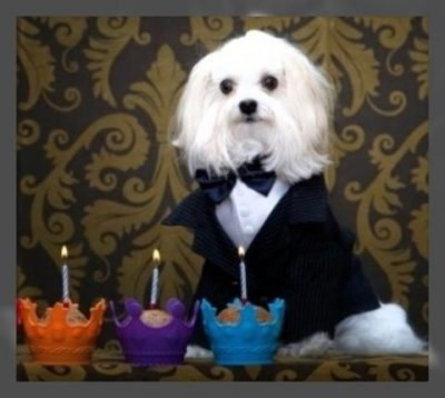 ropa elegante para perros bogota