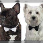 Ropa elegante para perros