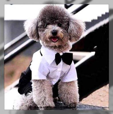ropa elegante para perros machos