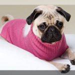 Ropa para cachorros encuentra tu modelo preferido