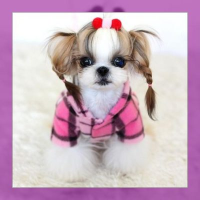 ropa para cachorroslima