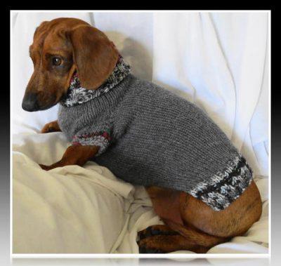 ropa para perro salchicha mini