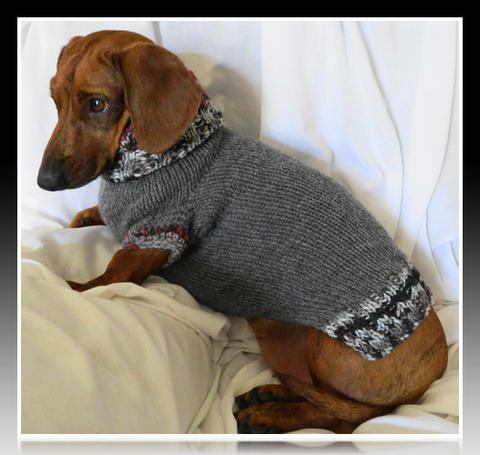 Ropita para perros salchichas im genes de ropa para perros for Puertas perros medianos