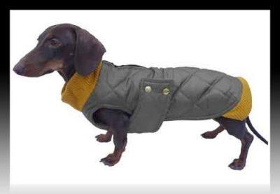 ropa para perros dachshund