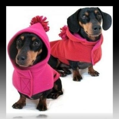 ropa para perros grandes moldes gratis