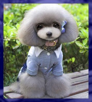 ropa para perros machos