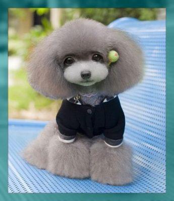 ropa para perros machos pequeños