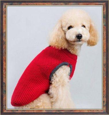 ropa para perros pequeños