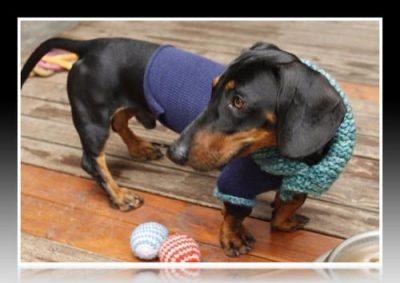 ropa para perros salchichas moldes