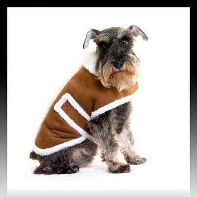 ropa para perros schnauzer