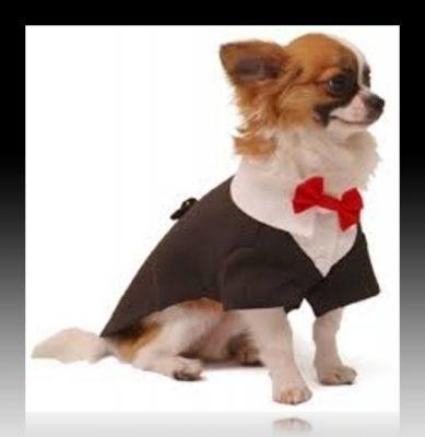 vestidos elegantes para perros