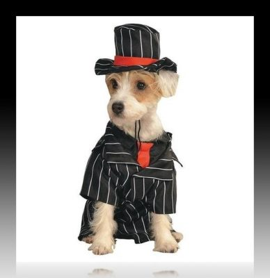 vestidos elegantes para perros pequeños
