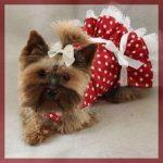 Vestidos para mascotas hembras hermosos modelos