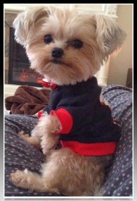 vestimenta para perros