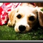 Ropa para perros labradores cachorros