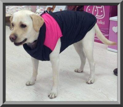 ropa para cachorros labradores
